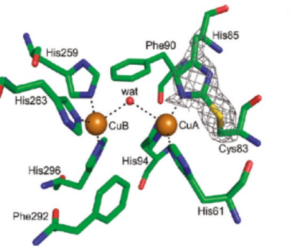 Cao chiết ức chế enzyme